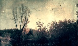 Grunge effected photo of spooky dark forest