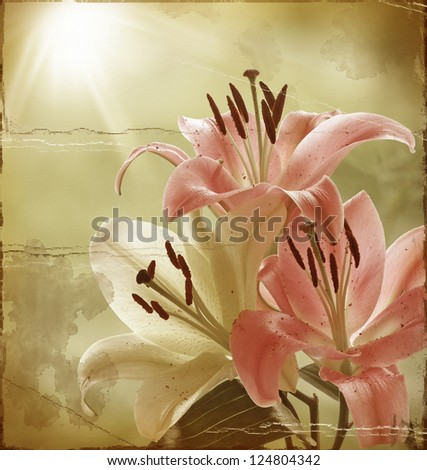 Grunge Flowers. Pink and Yellow Lilies in the Morning Sunshine - stock photo