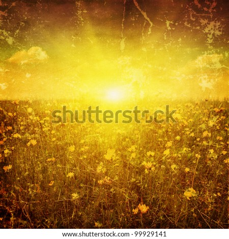 Grunge image of clover yellow field at sunset.