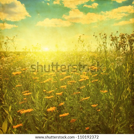 Grunge image of daisy field at sunset.