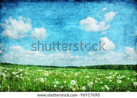 grunge image of dandelion field.