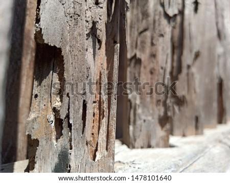 Grunge old weathered wood surface, weathered wood #1478101640