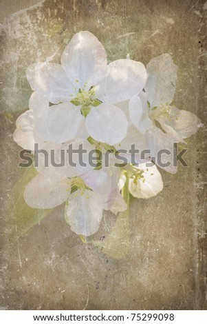 grunge paper with apple blossom