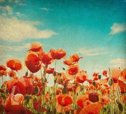 grunge paper with poppy field against  blue sky.