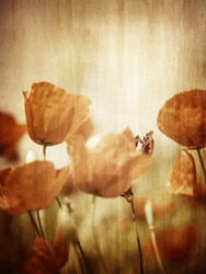 Grunge style photo of poppy flower field, abstract natural background, beautiful textured wallpaper, beauty of nature concept