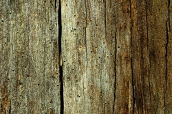 Grunge texture of old and rotten wood