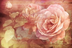Grunge texture with floral background in vintage style. Romantic pink roses flowers with water drops growing in garden