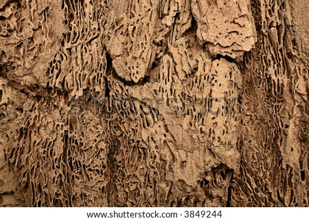 grunge texture, wood infested by termites