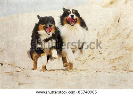 grunge textured picture of two running Australian Shepherds