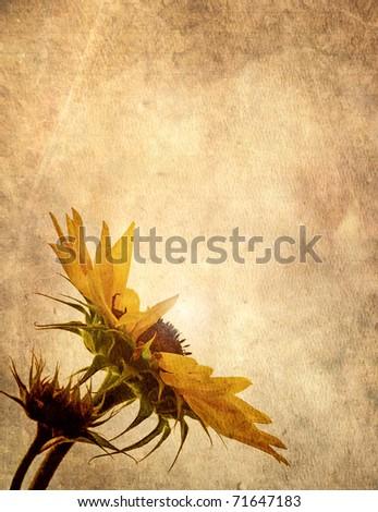 Grunge textured sunflower head with glowing center on antique grunge paper background.