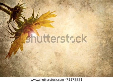 Grunge textured sunflower head with glowing center on antique paper background.