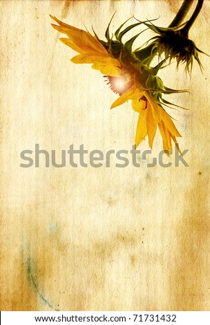 Grunge textured sunflower head with glowing center on antique paper background with copy space.