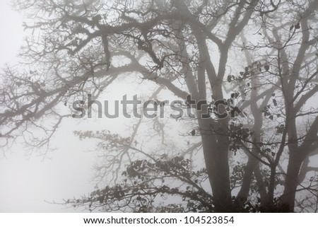 grunge trees in fog