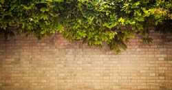 grunge wall background with foliage
