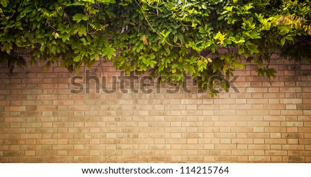 grunge wall background with foliage #114215764