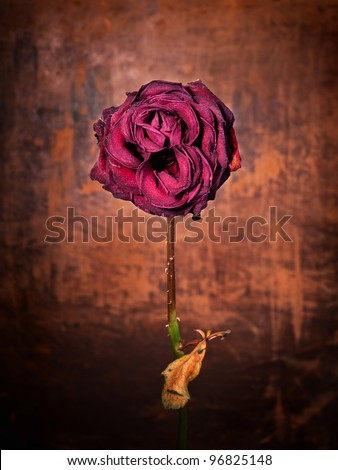 Grunge wilted rose over old leather background