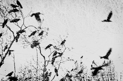 Grunge winter background with tree branches and crows