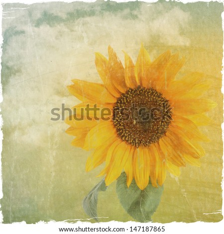 Grunge Yellow Sunflower against a cloudy sky background