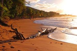 Guadeloupe sandy beach. Caribbean vacation sunset landscape. Perle Beach driftwood (Plage de la Perle).