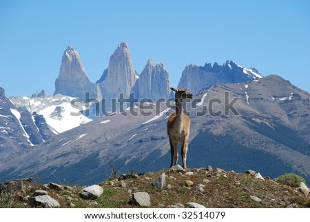 Guanaco in the face of the mountains, Torres del Paine park, Chile, Patagonia