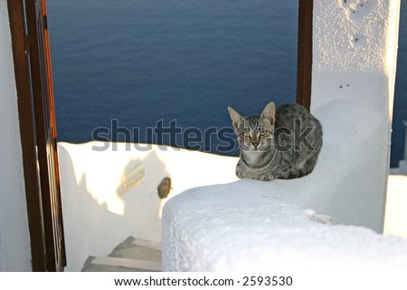 Guard cat with the sea background