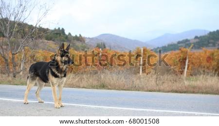 Guard of vineyards