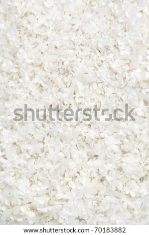 Guelder rose blossoms - background