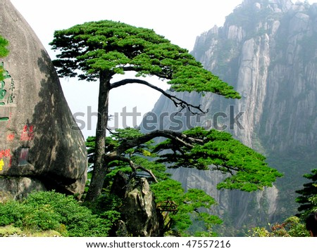 Guest-Greeting Pine  Huangshan