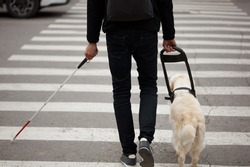 guide dog golden retriever helping young blind person with long cane walking in city. smart animal take care of owner, love him, dog is best friend