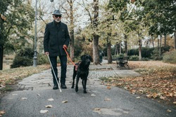 Guide dog helping blind man in park.