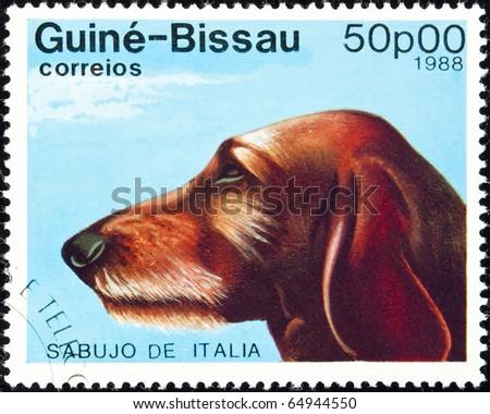GUINEA-BISSAU - circa 1988:postage stamp features a Sabujo de Italia dog, circa 1988 in the Republic of Guinea-Bissau.
