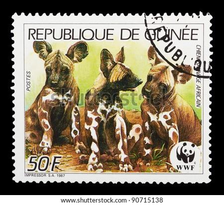 GUINEA - CIRCA 1987: A stamp printed by GUINEA shows wild dog, series animals, circa 1987