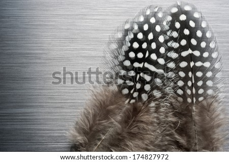 Guinea fowl feathers on brushed metal background