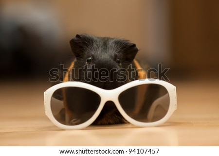 Guinea pig with kid's sunglasses on the floor