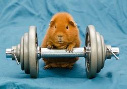 guinea power reloaded