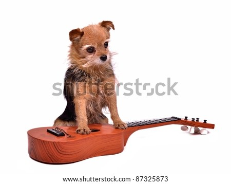 Guitarist dog, isolated on white background
