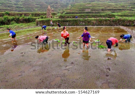 GUIZHOU, CHINA - APRIL 18: Spring field work in southwestern China, April 18, 2010. Chinese farmers are planting rice seedlings into soil. Women stand knee-deep in water in rice field, a peasant farm.