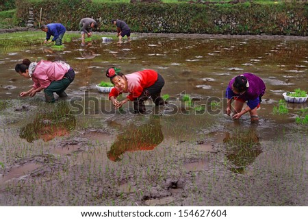 GUIZHOU, CHINA - APRIL 18: The peasant farm in southwestern China, the spring field work, planting rice the rice fields, April 18, 2010. Agriculture and crop production in mountainous areas of China.