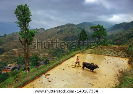 GUIZHOU PROVINCE, CHINA - APRIL 9: Spring field work on the paddy fields of Southwest China, April 9, 2010. Zhaoxing; Dong Village. Chinese farmer cultivates land plow, using the power of the buffalo.