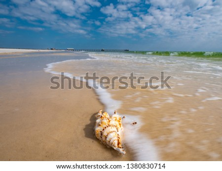 Gulf Shores Alabama scenic seashore. Waves wash on the sandy beach across a seashell. The white surf covers a beautiful sea shell. The emerald water at Orange beach near Florida is amazing. #1380830714