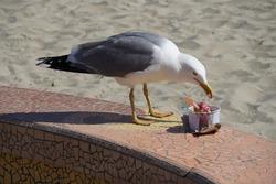gull enjoying ice cream on the beach at palavas les flots