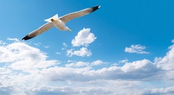 Gull flying in the blue sky with white clouds, close-up seagull above sea