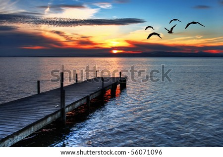 gulls fly over the sea