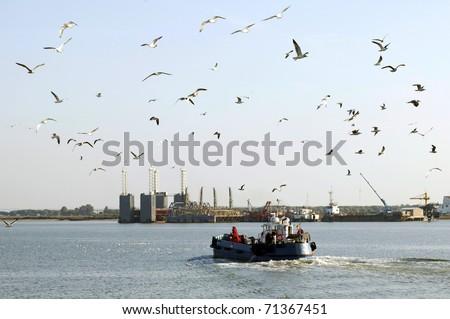 gulls flying in a port