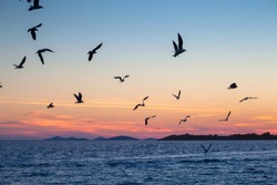 Gulls in sky over sea water at sunset, selective focus