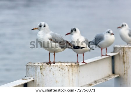 gulls on river barrier