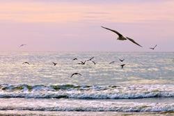 Gulls on the beach. Seascape.