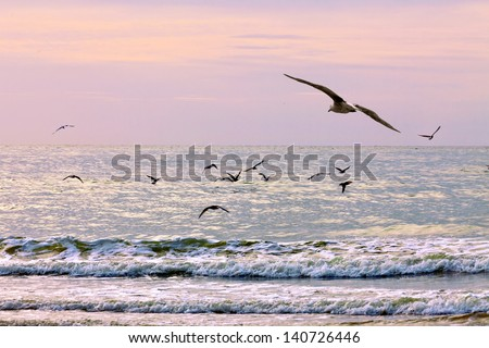 Gulls on the beach. Seascape.