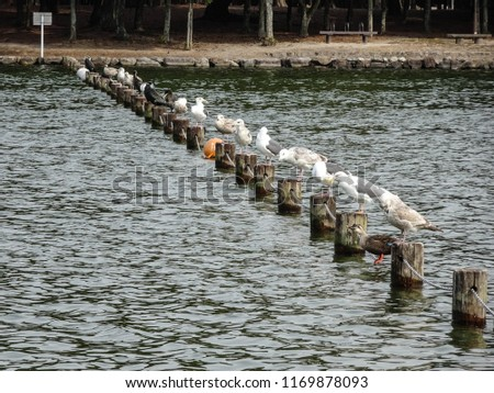 Gulls on the Repetitive Posts in the Japanese Pond #1169878093