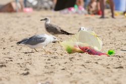 Gulls on the sea shore beach dragged a bag of food with holidaymakers